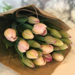 Tinkering Tulips